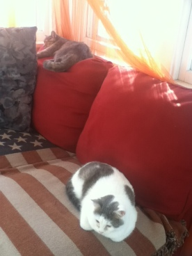 ~Sassy and Gigi catching so afternoon Sunrays~